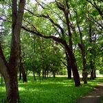 Botanical Garden | Parks and Public Gardens | Vitebsk - Attractions